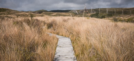 Tramping along the Heaphy Track