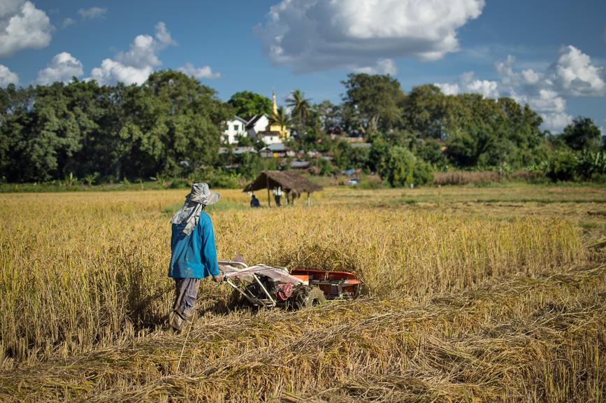 stupa rice paddy